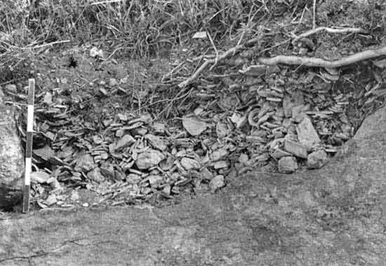 4. Area B, refuse pit of pottery workshop debris in the trench, looking north.