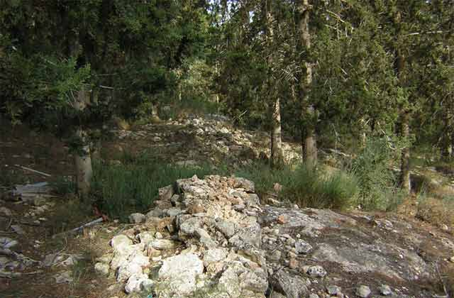 8. Site 2, fieldstone wall.