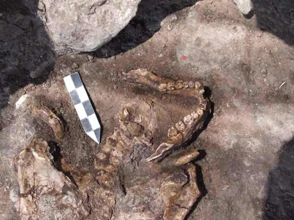 11. Human burial, close up view, looking southwest.